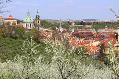 View on the spring Prague St. Nicholas' Cathedral with the green Nature and flowering Trees, Czech Republic Stock Image