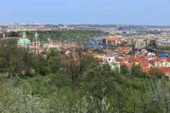 View on the spring Prague St. Nicholas' Cathedral with the green Nature and flowering Trees, Czech Republic Royalty Free Stock Photo