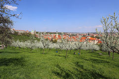 View on the spring Prague  St. Nicholas' Cathedral, green Nature and flowering Trees, Czech Republic Royalty Free Stock Photo