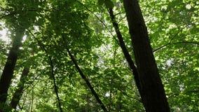 View of spring season treetops. Rotation on place in the woods. Lovely view of spring season treetops. Rotation on place in the woods stock video