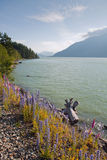 View of the Squamish River in British Columbia royalty free stock photo