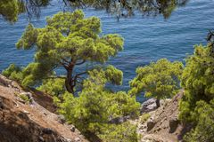 View of the steep pine forest overlooking the sea on a hot summer day. stock images
