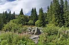View of stone river big granite stones on rocky river from a distance in  Vitosha national park mountain Stock Image