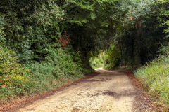 View of stony road going through thicket Royalty Free Stock Photos