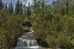 View of stream, grass, wild flower and waterfall in Rila mountain toward Maliovitza peak. 