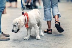 View of the street from the dog's perspective. People walking on the street with dog on leash Royalty Free Stock Images