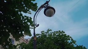 View of street flashlight among green leaf of tree. Blue sky. Summer day.  stock video