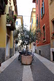 The view on the street with fragment of the buildings facade and the big pot plant. Travel to Verona, Italy. The view on the street with fragment of the Royalty Free Stock Image