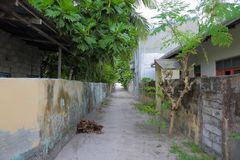 View of a street with old houses and green trees. Dhangethi island. View of a street with old houses and green trees. Maldives, Dhangethi island Stock Images