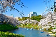 Sakura cherry blossom and red maple trees view park  in Tokyo. View street in Tokyo park cherry blossom tree chidorigafuchi park Chiyoda royalty free stock photos