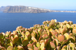 View with succulents of Thira. Stock Images