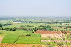 View of sugar cane fields Stock Image