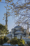 View of the Sultanahmet Mosque and flowering trees Stock Photo