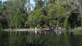 View of summer city park landscape in the afternoon stock video