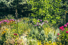 View of summer garden. View of garden during the summer in the sunlight Royalty Free Stock Photos