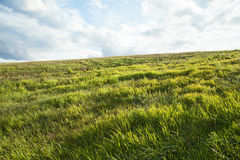 View of a summer meadow Stock Image