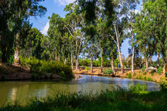 View of summer park Yarkon Stock Photo