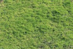 PATCH OF UNEVEN GREEN GRASS. View of sunlight on a patch of uneven green lawn in spring stock photo