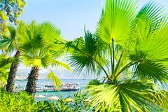 View of sunny mediterranean coast through leaves of palm trees stock images