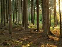 View in sunny summer forest. South Bohemia stock photography