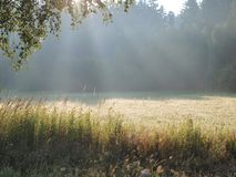 View on a sunny summer meadow. South Bohemia . Czech Republic stock images
