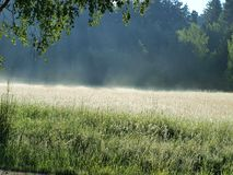 View on a sunny summer meadow. South Bohemia . Czech Republic Royalty Free Stock Photo