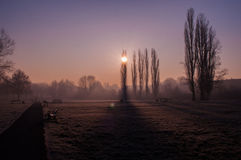 View on a sunny winter morning in the park Royalty Free Stock Photo