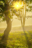 View sunrise on the edge of forest royalty free stock images