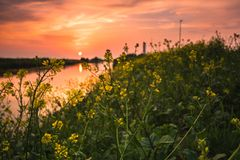Sunset and flowers royalty free stock images