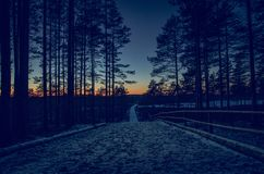 The view during a sunset in the forest Stock Photo