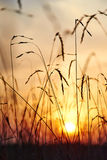 View of the sunset through the grass Stock Image