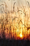 View of the sunset through the grass Stock Photos