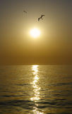 View of sunset and gulls Royalty Free Stock Photography