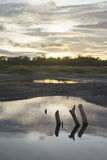 View of sunset moment with a stump among little lake. blurred background.selective focus. Royalty Free Stock Photos