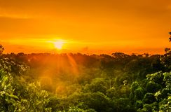 Sunset over the trees of the rain forest in Brazil stock image