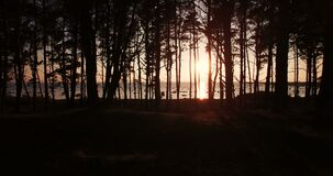 View of the sunset in the sea through the trees in summer. Aerial view of the sunset in the sea through the trees in summer stock video