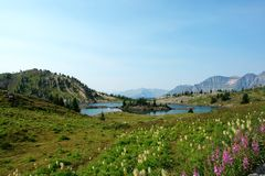 View at sunshine meadow Stock Photo
