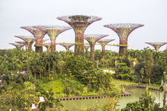 View on Super Trees in Singapore Royalty Free Stock Photography
