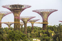 View on Super Trees in Singapore Stock Photo