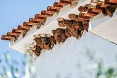 Swallow nests Stock Photos