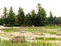 View of a swamp at dust in a wooded area. In Frontenac National Park stock images