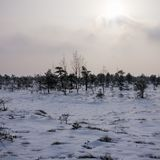 View of the swamp in the Kemeri National Park in Latvia, covered with snow in winter stock photo