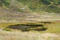 Upland bog in a mountain valley Royalty Free Stock Photography