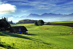 View on swiss Alps. Mauntain landscape with meadow and range of Swiss Alps Stock Photography