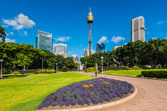 View at Sydney Moore Park Royalty Free Stock Photo