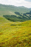 View of Tarnica trail in Bieszczady. Royalty Free Stock Photos