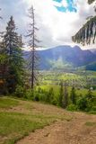 A view of the Tatra mountain range. In the foreground, green grass. And trees Stock Images
