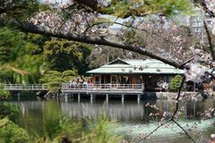 Tea House in Tokyo. A View of a Tea House Through the Cherry Blossoms stock image