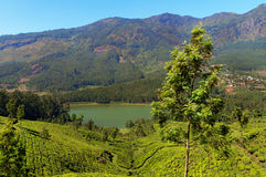 View of tea plantation valley and Madupetty Dam in Munnar Stock Image