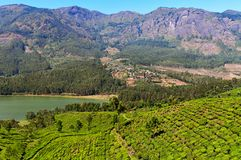 View of tea plantation valley and Madupetty Dam in Munnar Stock Photography